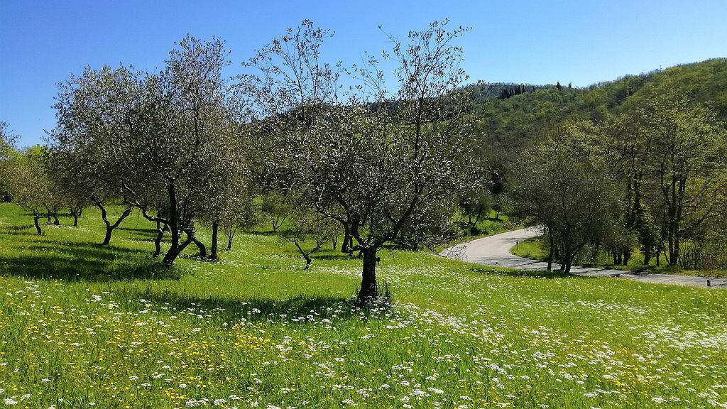casa-vacanze-chianti-best-house-come-raggiungere-greve-strada-olivi