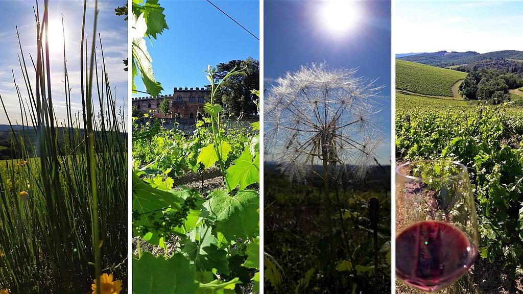 casa-vacanze-chianti-best-house-dintorni-collage-foto