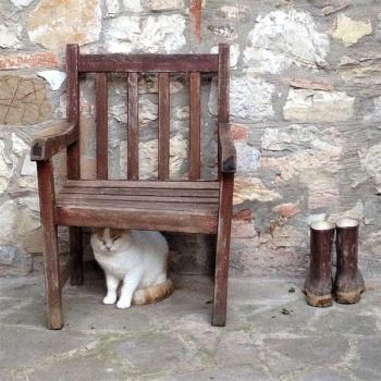 casa-vacanze-chianti-best-house-dintorni-gatto